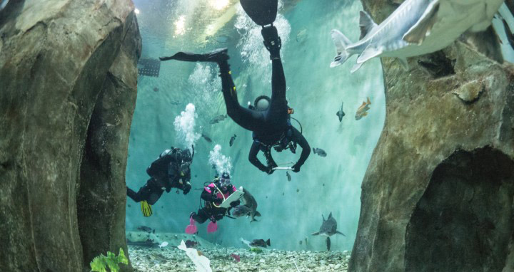 scuba divers in a tank